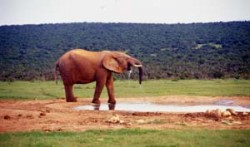 Public Holidays Africa